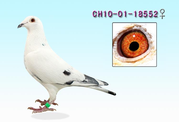 八旗鸽舍ch10-01-017651雌克拉克x詹森